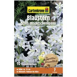 GARTENKRONE Gartenkrone Scilla mischtschenkoana, Hellblau, 10