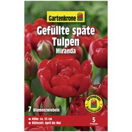 GARTENKRONE Gefüllte Späte Tulpe Tulipa X hybrida »Miranda«, rot