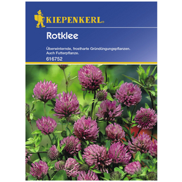 KIEPENKERL Gründüngung pratense Trifolium »Rotklee«