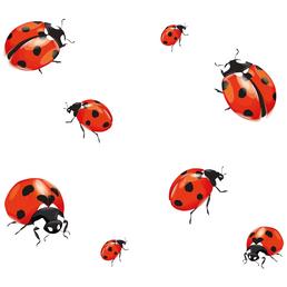 WENKO Herdabdeckplatte Universal Marienkäfer, Ladybird