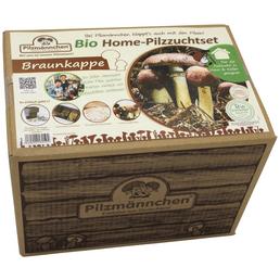 Home Pilzzuchtset Bio Braunkappe, Nutzung im Haus