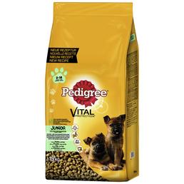 PEDIGREE Hundetrockenfutter »Vital Protection Maxi«, Huhn / Reis, 15 kg