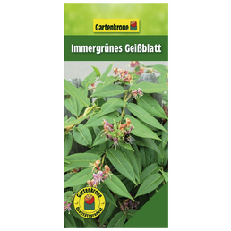 GARTENKRONE Immergrünes Geißblatt, Lonicera henryi, Blüten: orange