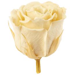 »Infinity-Bloom«, 12er-Pack konservierte Rosenköpfe, beige