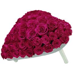 Infinity-Bloom  »Infinity-Bloom«, Rosenherz , max. Wuchshöhe: 5  cm, mehrjährig