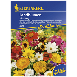KIEPENKERL Kiepenkerl Blumenmischung Blütenteppich