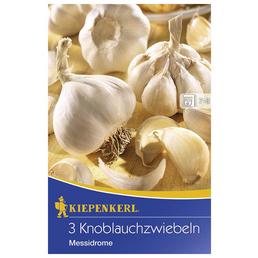 KIEPENKERL Knoblauch sativum Allium