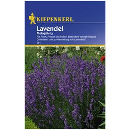 KIEPENKERL Lavendel angustifolia Lavandula