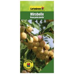 GARTENKRONE Mirabelle, Prunus domestica »Nancymirabelle CAC«, Früchte: süß, zum Verzehr geeignet