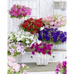 Mix aus verschiedenen Sommerpflanzen