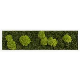 Moosbild weißer Rahmen  Wald- und Ballenmoos, BxHxT: 20 x 70 x 6  cm