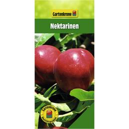 GARTENKRONE Nektarinen, Prunus nucipersica, Früchte: süß, zum Verzehr geeignet