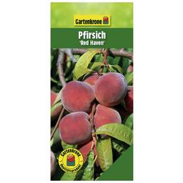 GARTENKRONE Pfirsich, Prunus persica »Redhaven«, Früchte: süß, zum Verzehr geeignet