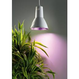 BIOGREEN Pflanzenlampe »L15«, B x T: 0
