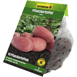 GARTENKRONE Pflanzkartoffel, Solanum tuberosum »Rosara «, 10 Stück