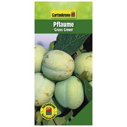 GARTENKRONE Pflaume, Prunus domestica »Grass Green«, Früchte: süß-säuerlich, zum Verzehr geeignet