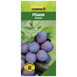 GARTENKRONE Pflaume, Prunus domestica »Herman«, Früchte: süß-säuerlich, zum Verzehr geeignet