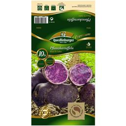Quedlinburger Planzkartoffeln, Solanum tuberosum »Blaue St Galler «, 10 Stück
