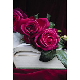 ROSEN TANTAU Rose, Rosa x hybrida »Goethe«, Purpurpink