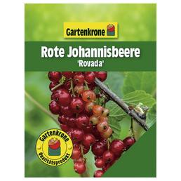 GARTENKRONE Rote Johannisbeere Ribes rubrum »Rovada«