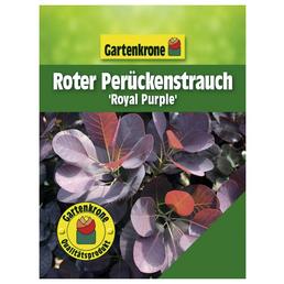 GARTENKRONE Roter Perückenstrauch, Cotinus coggygria »Royal Purple«, Blütenfarbe braun