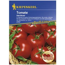 KIEPENKERL Salat-Tomate lycopersicum Solanum »Harzfeuer«