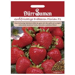 DÜRR SAMEN Samen Erdbeeren Florian F1