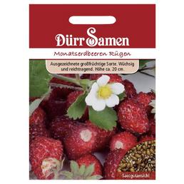 DÜRR SAMEN Samen Monats-Erdbeeren