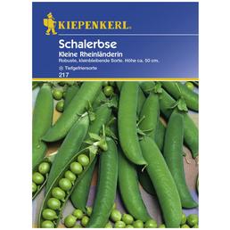 KIEPENKERL Schalerbse sativum Pisum »Kleine Rheinländerin«