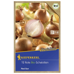 KIEPENKERL Schalotte cepa var. ascalonicum Allium