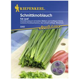 KIEPENKERL Schnittlauch tuberosum Allium »Fat Leaf«