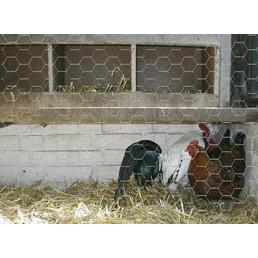 MR. GARDENER Sechseckgeflecht, HxL: 50 x 1000 cm, silberfarben