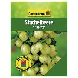 GARTENKRONE Stachelbeere Ribes uva-crispa »Inventa«