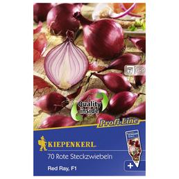 KIEPENKERL Steckzwiebel cepa Allium