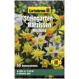 GARTENKRONE Steingarten-Narzisse Narcissus Pseudonarcissus »Mischung«, bunt