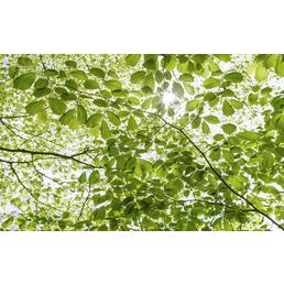 KOMAR Vliestapete »Im Frühlingswald«, Breite 450 cm, seidenmatt