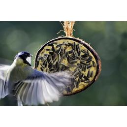 Vogelfutter, Rosinen / Erdnuss / Sonnenblumenkerne / Mehlwurm, 2000 g