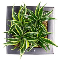 flowerbox Wandbegrünung, BxHxT: 25 x 25 x 6 cm, schwarz