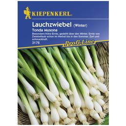 KIEPENKERL Winterlauchzwiebel cepa Allium