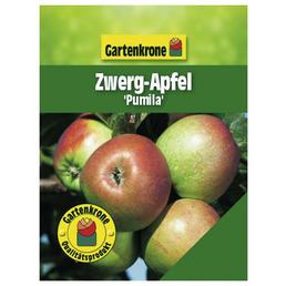 GARTENKRONE Zwerg-Apfel, Malus pumila, Früchte: süß, zum Verzehr geeignet